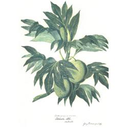 Breadfruit voyage